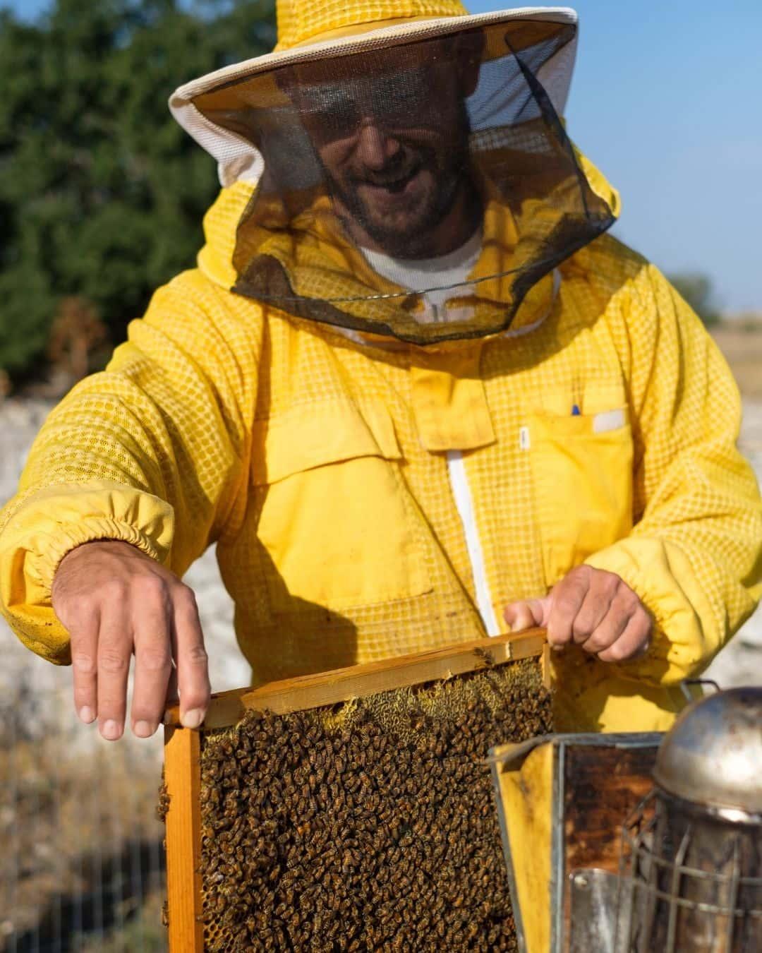 L'ape nell'orto