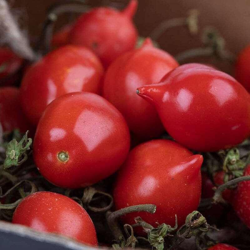 dettaglio macro pomodorini del piennolo del vesuvio